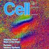 The Feldheim lab's research was featured on the cover of Cell, Oct. 2, 2009