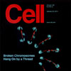 Sullivan laboratory research on mitosis, damaged chromosomes and their relationship to tumorigenesis—on the cover Cell, January 22, 2010